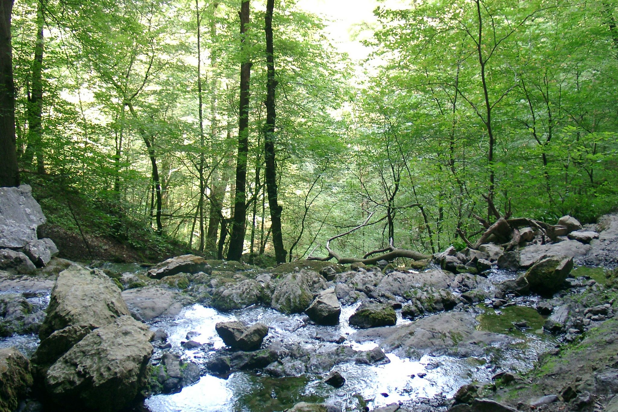 Randonnée de la Bidouze - Pays Basque