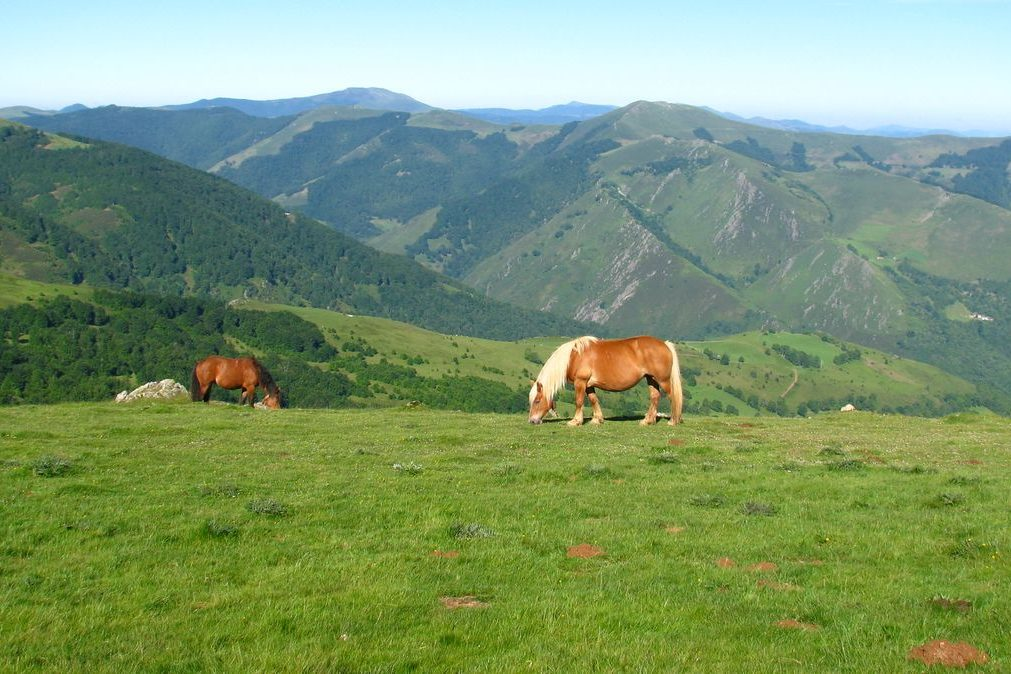 Pottocks - Pays Basque - coupdecoeurbasque.fr